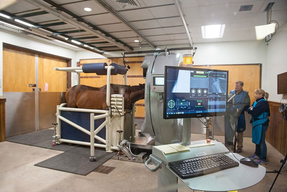 Horse patient undergoes CT scan
