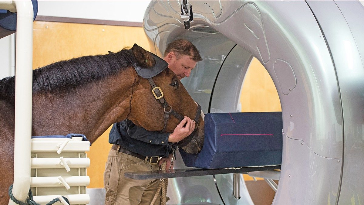 Horse getting a CT scan