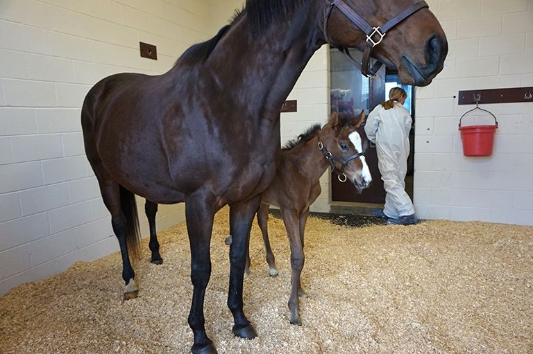 Mare and foal in critical care unit