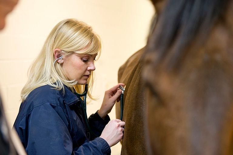 Equine patient exam